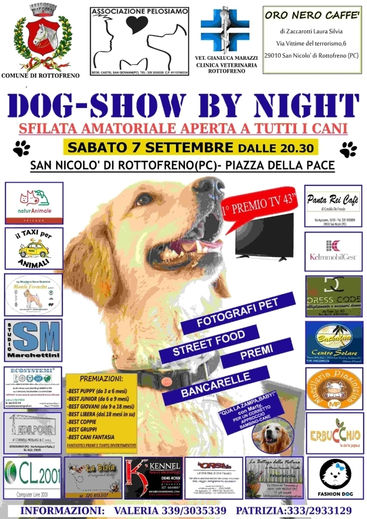 dog show by night-2