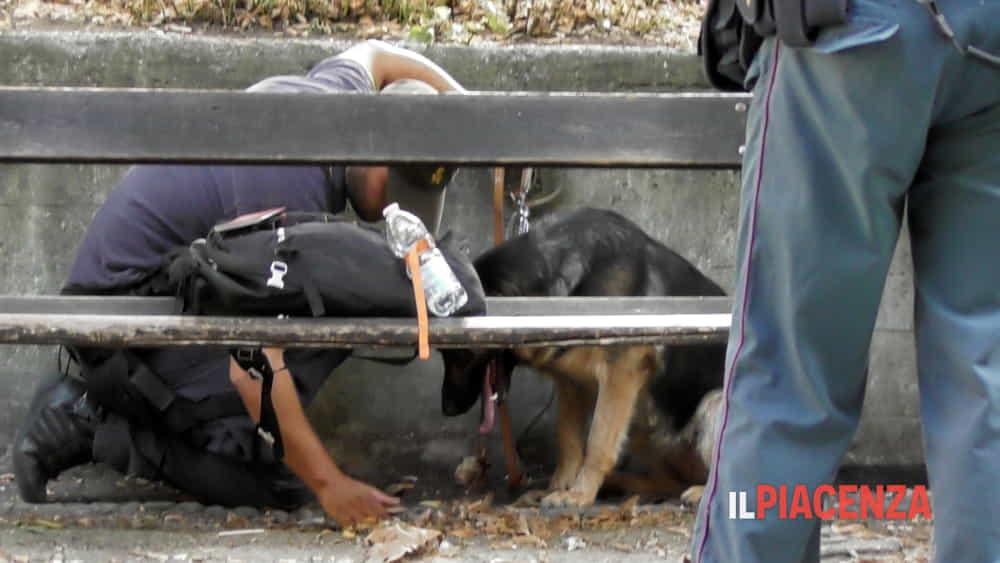 cane guardia di finanza-2
