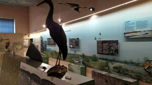 museo storia naturale-2