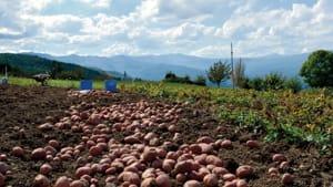patate montagna-2