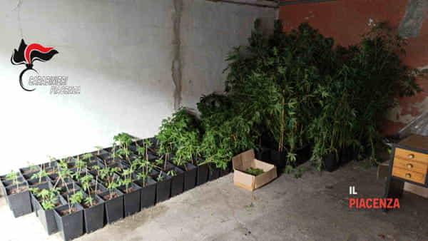 serra marijuana carabinieri 2020-3