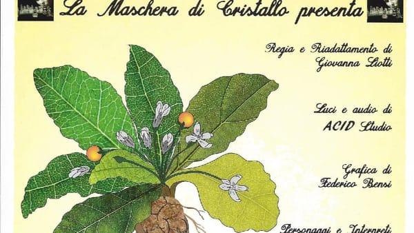 """Teatro San Matteo, la Maschera di Cristallo presenta """"La mandragola"""""""