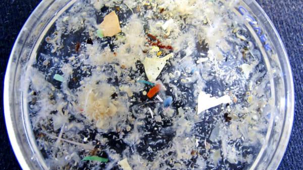 Anche nel fiume Po un mondo di plastica