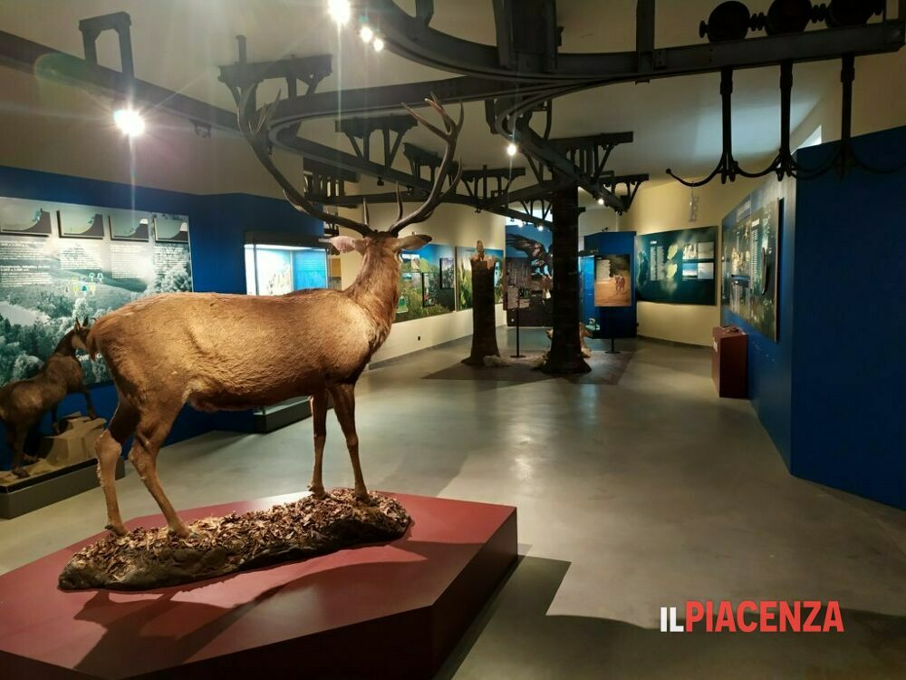 museo storia naturale-3