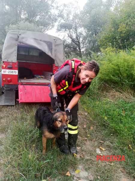 cane salvato fiume po vigili del fuoco 01-2